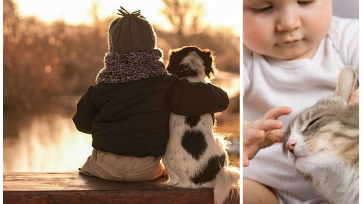 Kot i niemowlę w jednym domu, czyli o niełatwej miłości