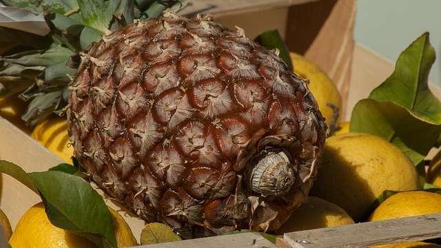 Ananas w ciąży i podczas karmienia piersią