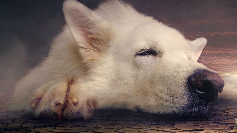 Sennik: pies. Jakie jest znaczenie snów o psie?