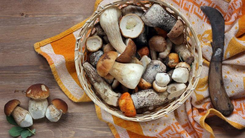 Jakie są objawy zatrucia grzybami?