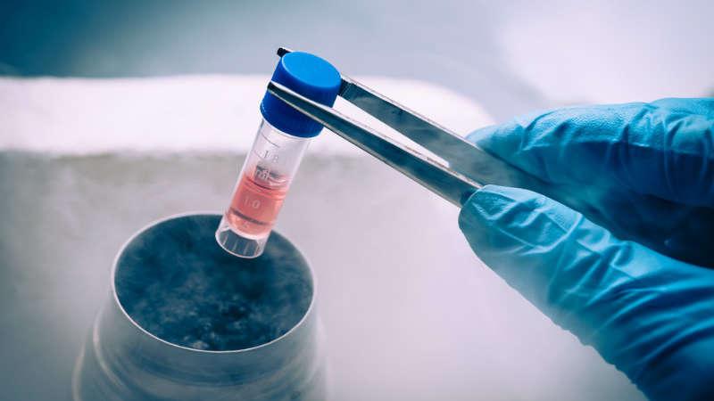 Komórki macierzyste: mamy klucz do długowieczności?