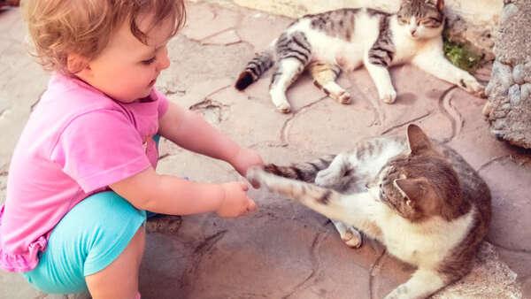 Choroba kociego pazura: objawy, przyczyny i leczenie. Czym grozi zadrapanie przez kota?