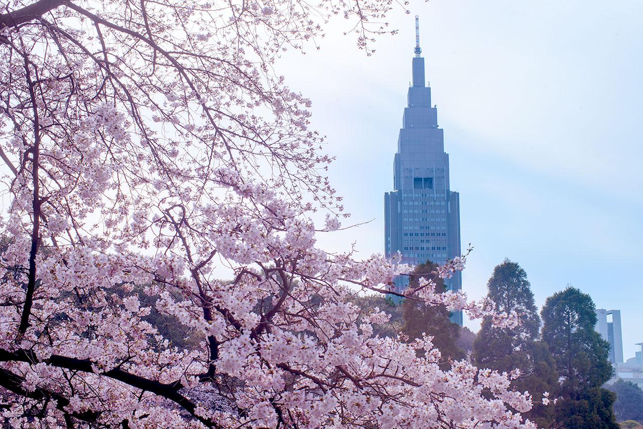 Niemowlak w Tokio