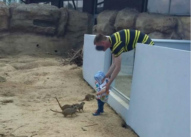 """""""Myślący inaczej"""" ojciec wsadził dziecko do wybiegu dla zwierząt"""