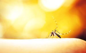 naturalne metody na komary