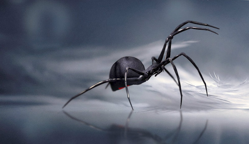 Sennik – pająk
