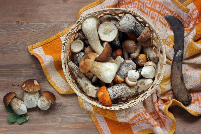 jakie są objawy zatrucia grzybami