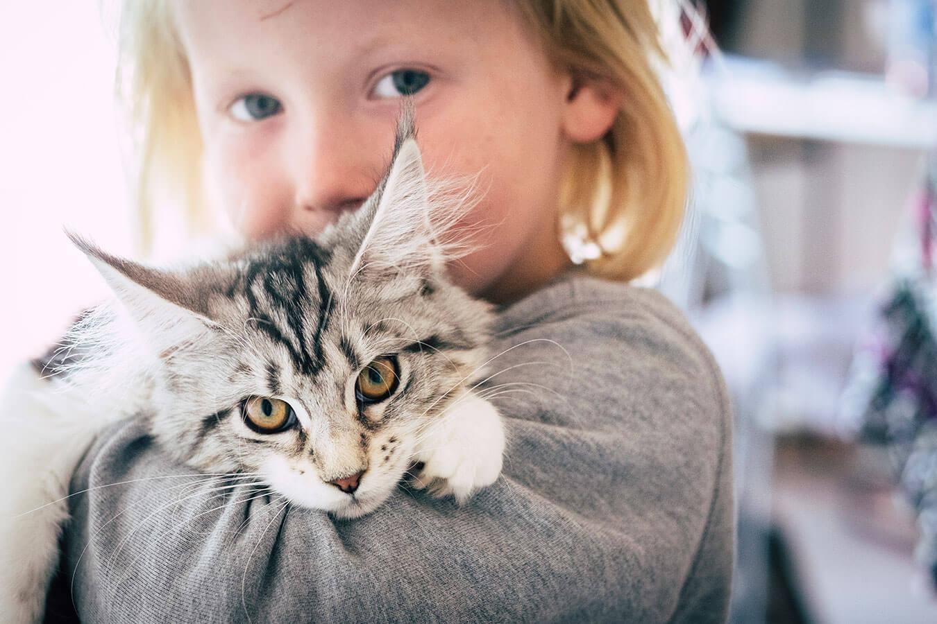 Najciekawsze imię dla kota – 724 propozycje