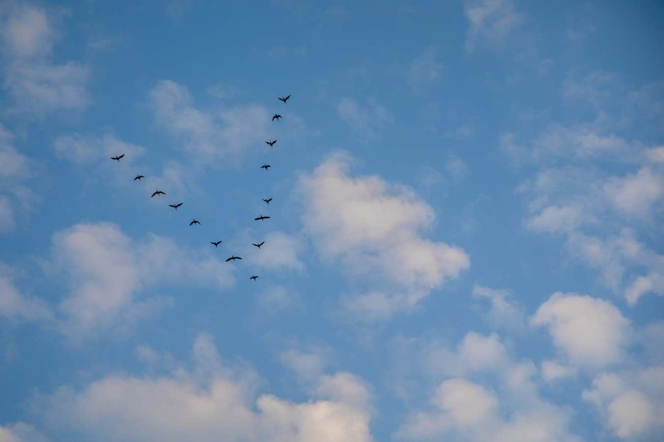 Jakie ptaki odlatują na zimę? Które ptaki odlatują do ciepłych krajów?