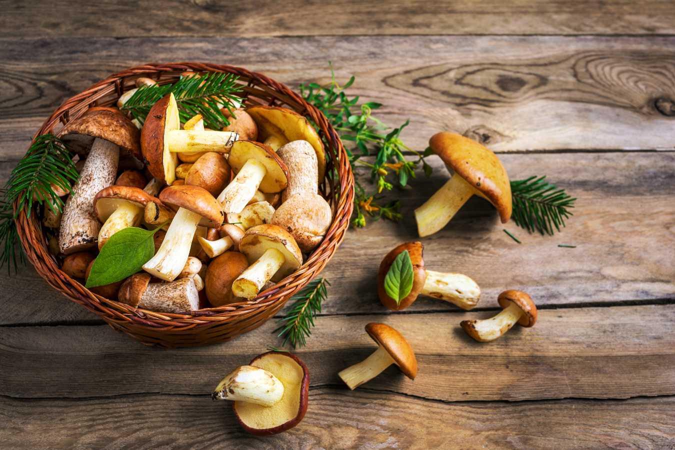 Jak przechowywać grzyby w lodówce? Ile grzyby mogą leżeć w lodówce?