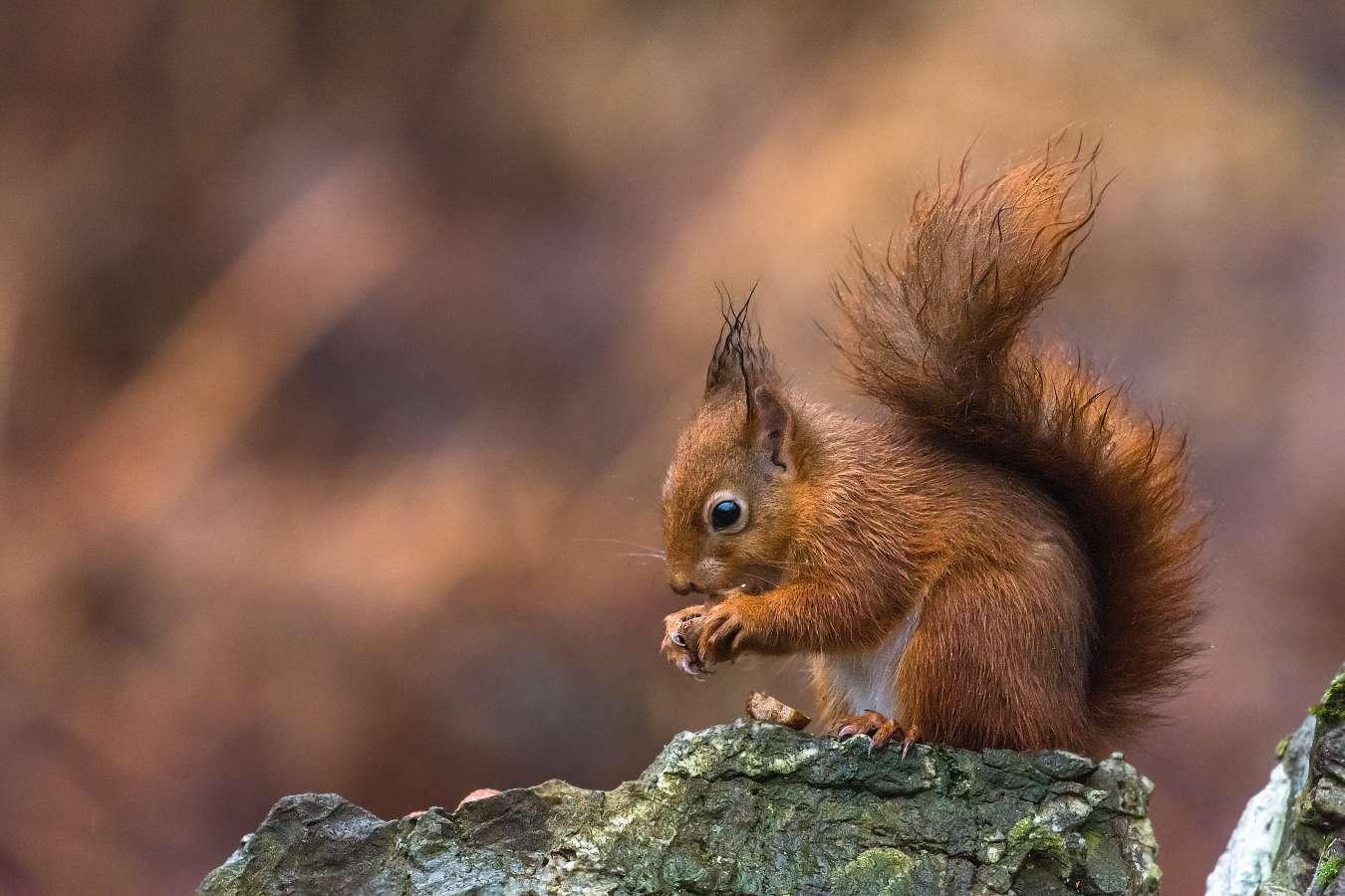 Opis wiewiórki. Jak napisać krótki opis?